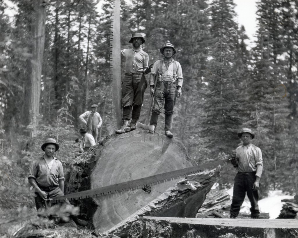 Red River Lumber Company tree fallers