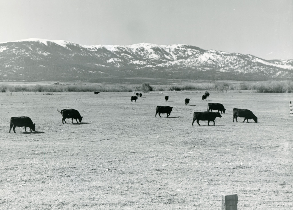 Can you imagine this pastoral scene between Susanville and Johnstonville, was once flooded with over three feet of water.