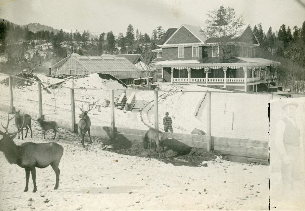 Elk, with the Wingfield residence in the background. Courtesy of Alphozene Terrill