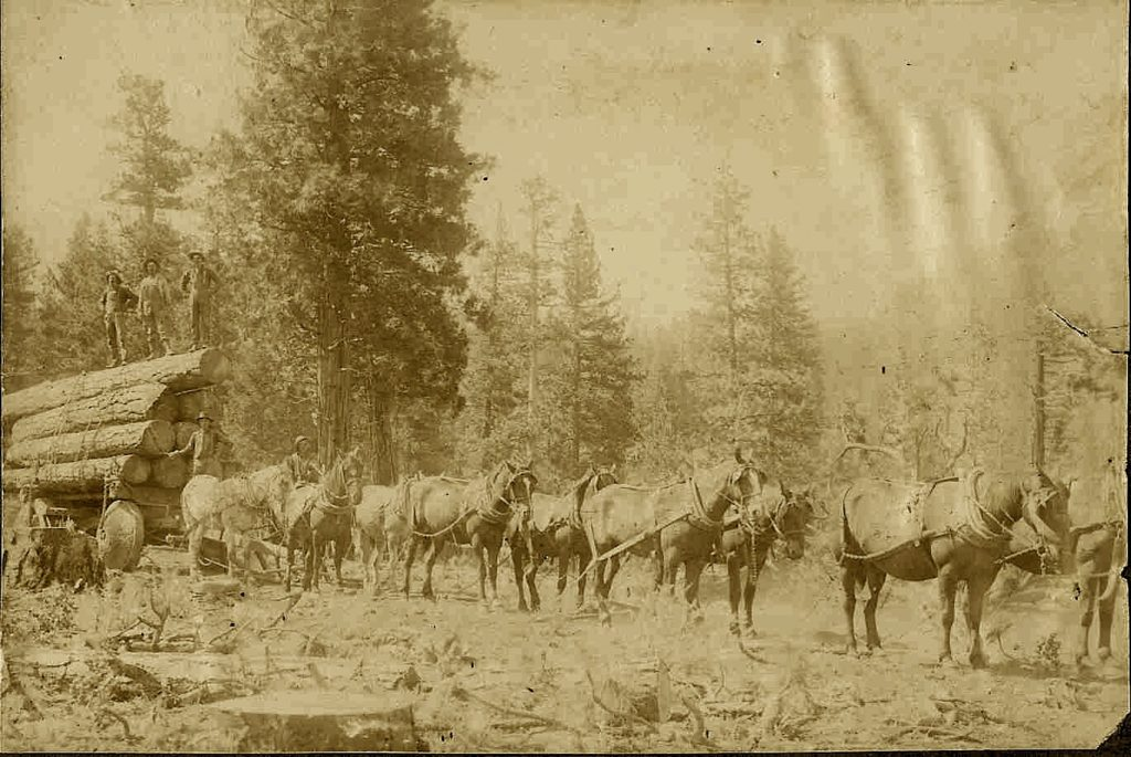 Logging at Bayley Creek, 1915.